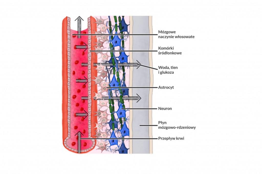 Ilustracje medyczne